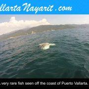 Sunfish off the coast of Puerto Vallarta